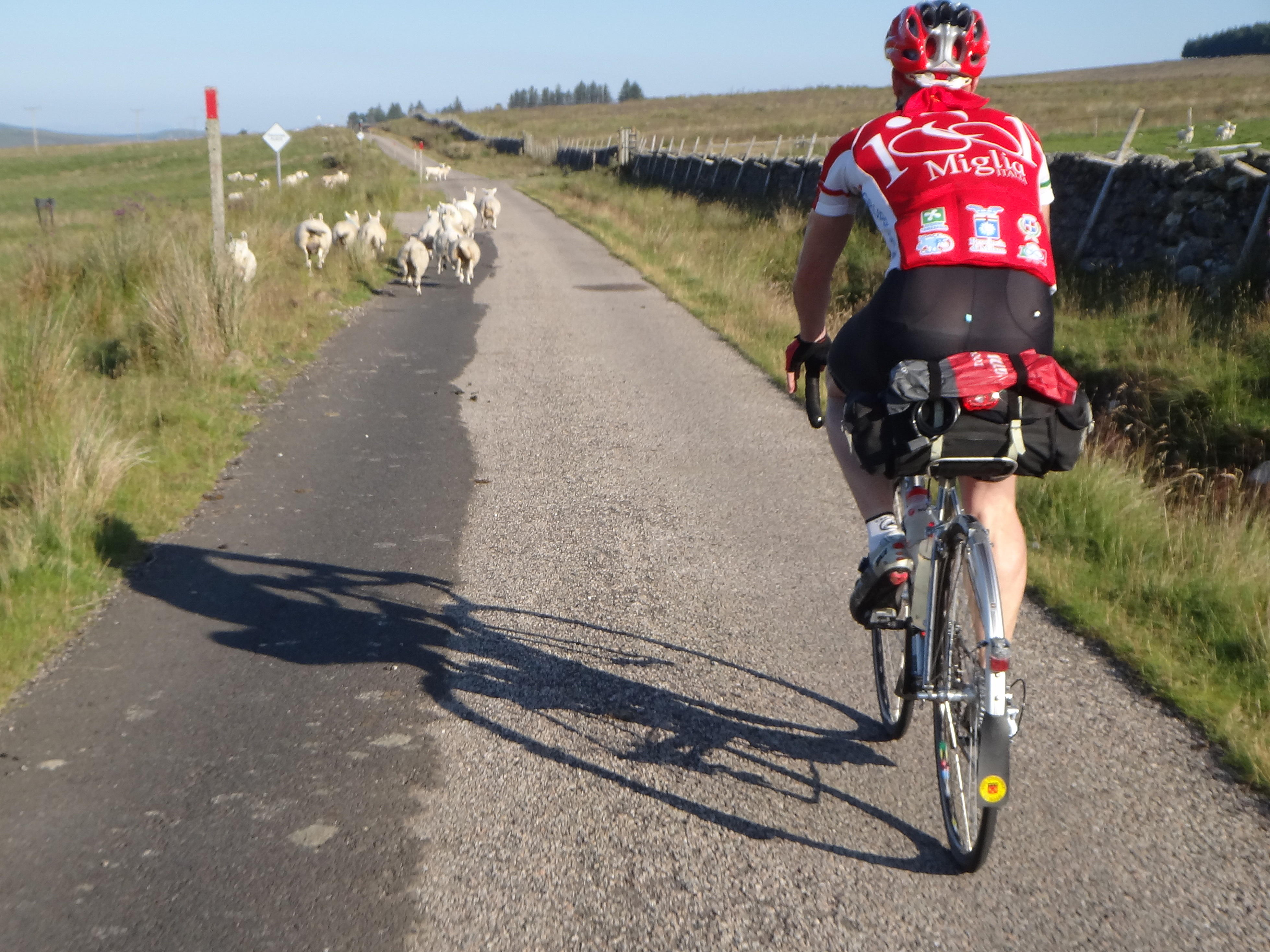 Our sole company for a while: chasing sheep